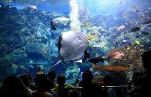 onderwaterbeeld van het oceaanleven in een aquarium foto