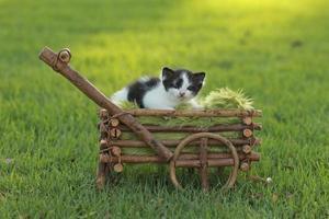 baby kitten buiten in het gras foto
