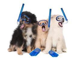 Pommeren puppy's die snorkeluitrusting dragen foto