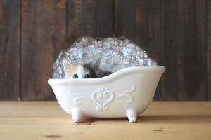 kitten in een badkuip met bubbels foto