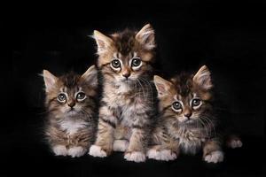 lieve schattige schattige kittens in afwachting van adoptie foto