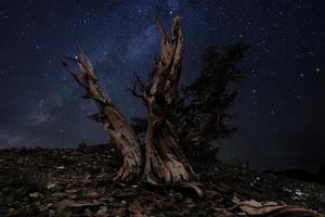 licht geschilderd landschap van sterren in bristlecone dennen foto