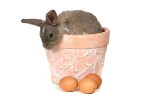 schattig konijntje gluurt uit op witte achtergrond foto