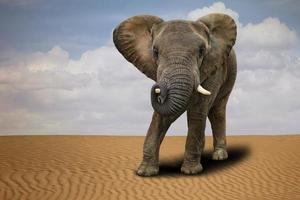 eenzame Afrikaanse olifant buiten bij daglicht foto