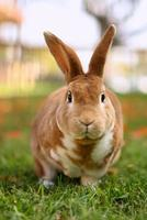 bruin konijn buiten foto
