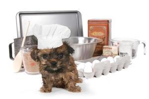 schattige yorkshire terrier chef-kok met hoed foto