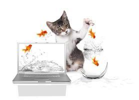 kitten klauwt naar goudvis die uit het water springt foto