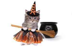 schattig katje met halloween-heksenthema foto