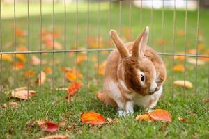 bruin konijntje dat zichzelf buiten aan het poetsen is foto