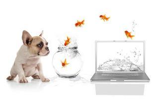 schattige puppy kijkt naar goudvissen die ontsnappen aan de virtuele wereld foto