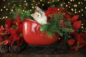 schattig schattig katje foto