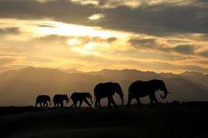 schattige Afrikaanse olifantenfamilie van vijf bij zonsondergang foto