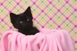 nieuwsgierig katje op een roze zachte achtergrond foto