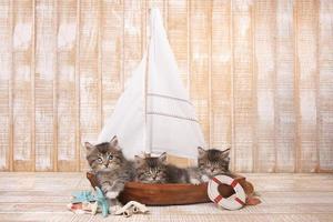 schattige kittens in een zeilboot met oceaanthema foto