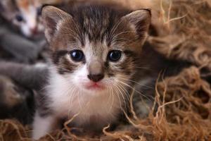 babykatje liggend in een mand met broers en zussen foto