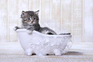 klein katje in een badkuip met bubbels foto