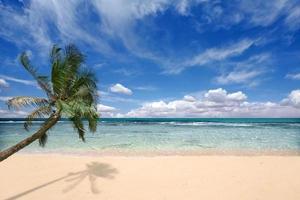 palmboom over de golven van de oceaan foto