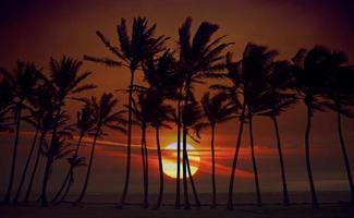 zonsopgang silhouet van hoge palmbomen foto