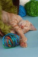 kleine oranje tabby kitten in studio foto