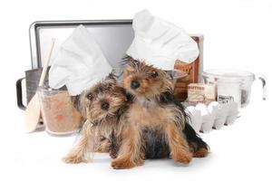 schattige yorkshire terriers chef-kok met hoed foto