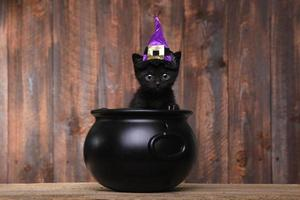 schattige zwarte halloween heks kat foto