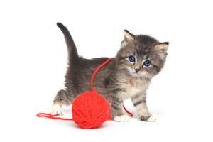 klein katje speelt met rode bal garen foto