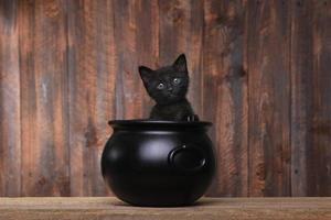schattig katje in halloween ketel op hout achtergrond foto