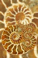 artistiek fossiel patroon foto