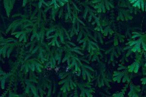 achtergrond bladeren groen in de natuur foto