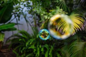 zeepbellen vliegen in de tuin foto
