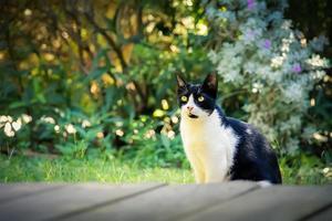 zwart-witte kat op het groene gras in de achtertuin foto