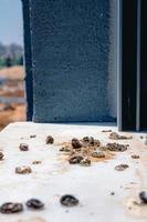 duivenpoep op de vensterbank foto