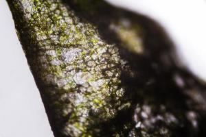 ingelegde komkommer onder de microscoop foto