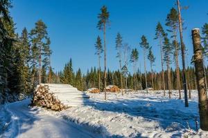 ontbossingsgebied in een zonnig maar winters koud zweden foto
