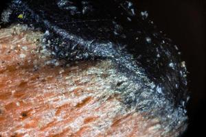 potloodpunt onder de microscoop foto