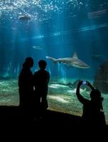 Genua, Italië, 2 juni 2015 - niet-geïdentificeerde mensen in het Genua-aquarium. het aquarium van genua is het grootste aquarium van italië en een van de grootste in europa. foto