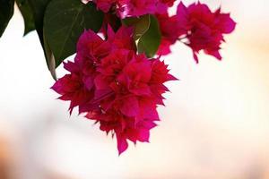 rode bloemen bloemen achtergrond foto
