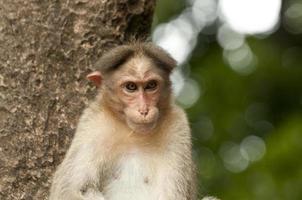 schattige aap op boom foto