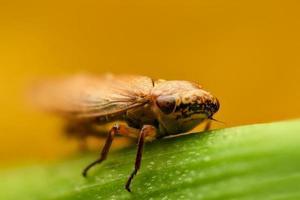 klein insect op een blad foto