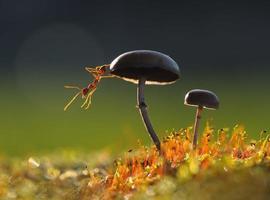 mier op een paddenstoel