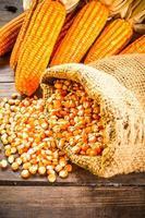stilleven van zaad en gedroogde maïs foto