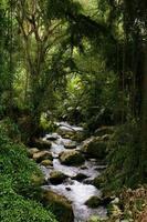jungle rivier foto