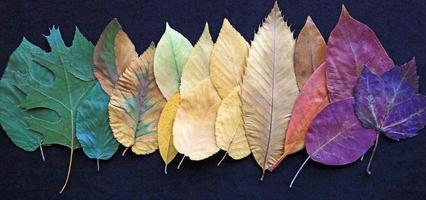 rij in kleurrijke bladeren foto