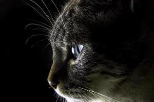 hoofd van de kat foto