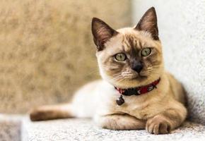 bruine kat liegen foto