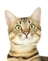 mooie kat op witte achtergrond foto