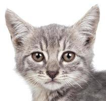 kleine kitten foto