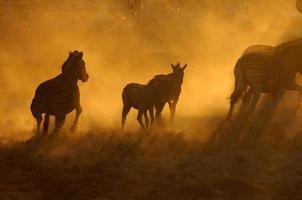 zonsondergang in okaukeujo, Namibië 3 foto