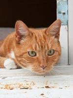 portretfoto van een kat die uit een raam kijkt