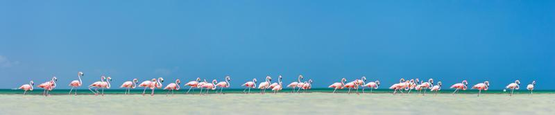 roze flamingo's panorama foto